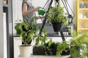 eliminar moscas de las plantas de interior